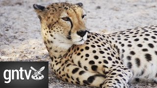 Sir Baniyas Island United Arab Emirates  city photo : Conserving endangered wildlife on Sir Bani Yas Island