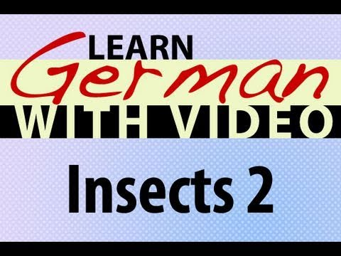 Learn German with Video – Insects 2