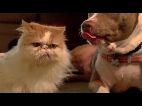 Peaches the cat vs Lucky the dog!