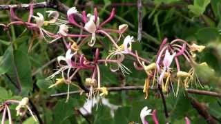 المحمية الطبيعية هوتوفو بلاتو