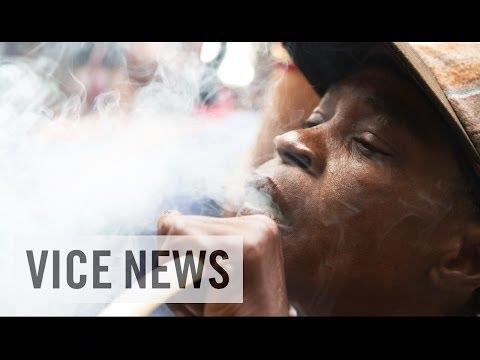 Jamaican Bud Business