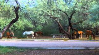 Nonton Salt River Wild Horses 2015 Film Subtitle Indonesia Streaming Movie Download