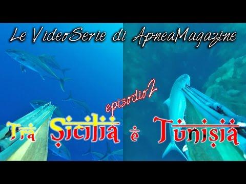 Pescasub nel Banco Skerki: Ricciole Curiose - Apnea Magazine