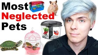 Pets People Often Neglect Without Knowing It by Tyler Rugge