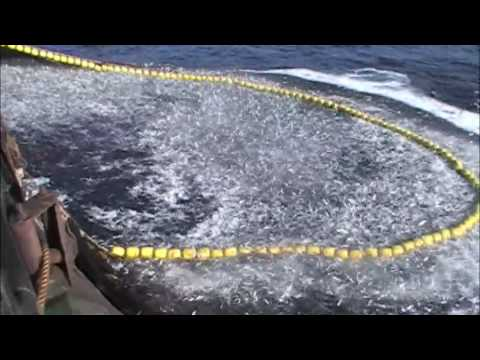 pesca de cerco collen - episodio 4