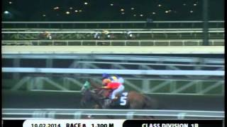 RACE 8 GREEN LOVER 10/02/2014