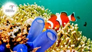 Manado Indonesia  city images : Wonderful Indonesia | Manado - Bunaken National Park
