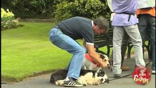 Dog Switch Prank