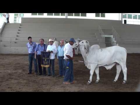 Monterrey 2010. Gran Campeón Indubrasil.