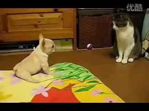 要不是汪星人的媽媽在,這隻貓應該早就翻臉了!!