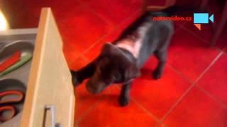 VIDEO DNE: Pak že pes v kuchyni překáží! POMLUVY!