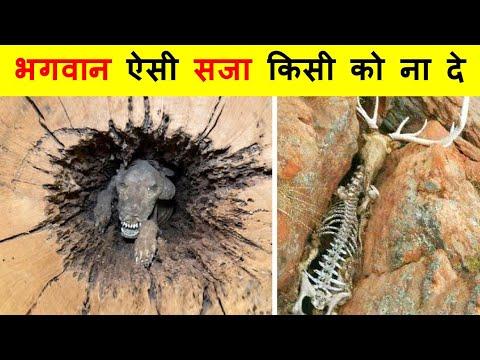 प्रकृति ने इन जीवों के साथ बहुत बुरा किया । Animals That Nature Has Treated Unfairly