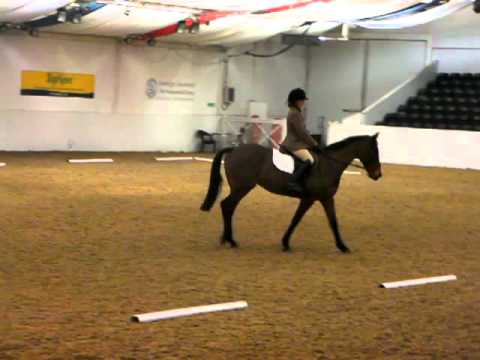 Arena UK Unaffiliated Dressage 16th February 2012