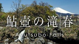 絶景 空撮 鮎壺の滝と桜と富士山 -  Ayutsubo Falls, Cherry blossoms and Mt. Fuji
