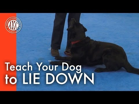 Teach Your Dog to Lie Down | AKC Dog Lovers - American …