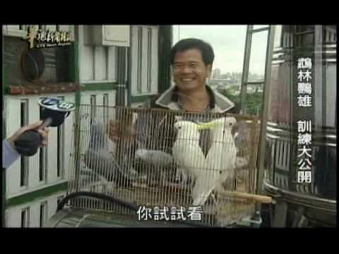 鸚鵡---華視新聞雜誌專訪飛翔達人SVCD.mpg