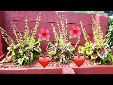 Imagenes bonitas de amor - Flores hermosas para mi amor. te amo