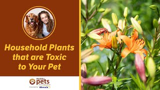 Household Plants that are Toxic to Your Pet