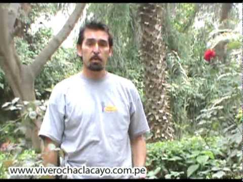 Poda de rosales jardiner a pcpi for Jardineria rosales