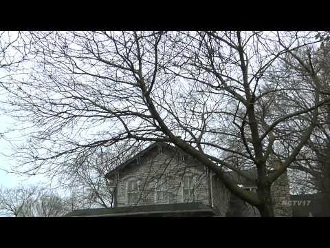 Ash Tree Treatment