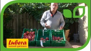 3 Lagerapfelsorten für Ihren Garten