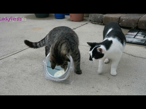 Cats For Cats To Watch HD ➙ EPIC 3 HOURS! Cat Videos * Cats Playing * Entertainment For Cats