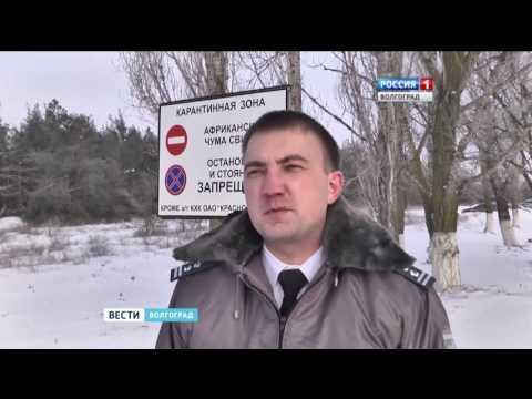 Сотрудники Россельхознадзора проверяют хозяйства Волгоградской области на АЧС