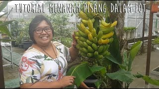 Video How to Grow Banana in a Pot MP3, 3GP, MP4, WEBM, AVI, FLV Juni 2019