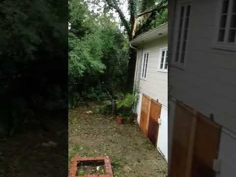 Backyard Hurricane Michael #Tallahassee