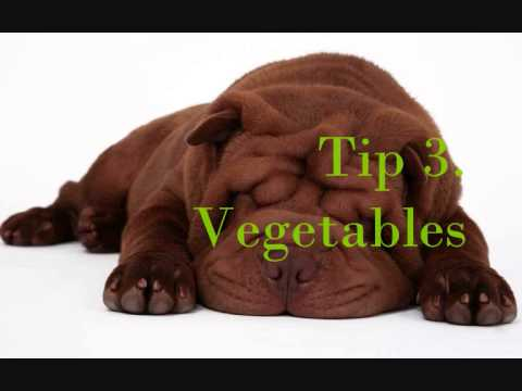 Homemade Dog Food Tips – Secrets!!!