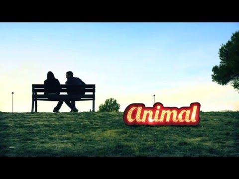Animal – Fets a mida