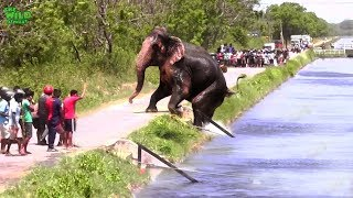 Video Faith in Humanity restored. An elephant stucked by a canal saved by humans MP3, 3GP, MP4, WEBM, AVI, FLV November 2018