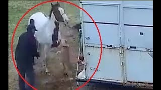 Video Pitbull attacks a horse and pays the price!!! MP3, 3GP, MP4, WEBM, AVI, FLV Februari 2019
