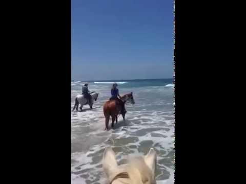 Swim Adventure on Horseback at San Diego Beach Rides