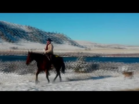 Real Cattle Drive, and Real Cowboys along the Madison River and 25 degrees F.