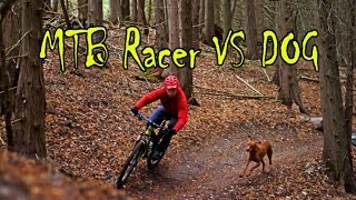 Video MTB Racer VS Dog   Rimbo Pengadang  Curup   Bengkulu MP3, 3GP, MP4, WEBM, AVI, FLV Desember 2017
