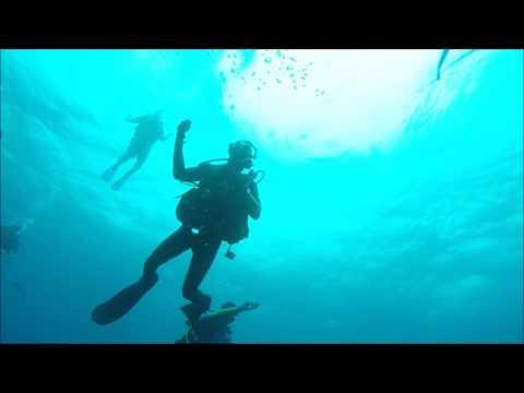 Shark dive 25 01