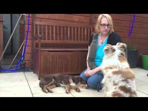 pfotenkontakte.de testet die Hundetragetasche von 4 Lazy Legs