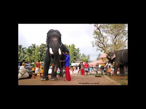 Video തടത്താവിള ശിവ (Thadathavila Siva) download in MP3, 3GP, MP4, WEBM, AVI, FLV January 2017