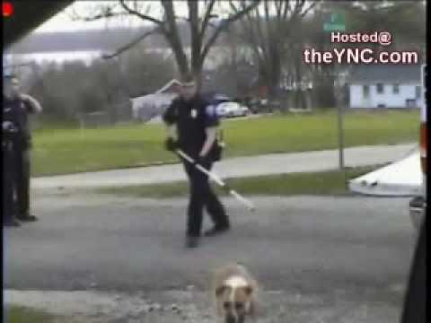 EL COLMO: Policías asesinos de animales