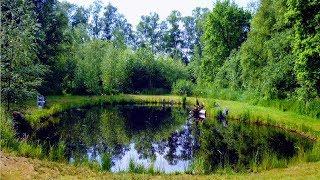 TEICHZUBEHÖR GÜNSTIG GIBTS HIER http://amzn.to/2p4MVt5UPDATE VIDEOLINK: http://youtu.be/a1JzFZaGWFQHeute zeige ich euch wie ich dieses Wasserloch in einen 300 Quadratmeter Naturteich verwandle. In einem Teich sollte der Wasserstand über das Jahr möglichst konstant gehalten werden. Der Wasserstand der Grube hier schwankt je nach Wetter und Jahreszeit bis zu einem Meter. Ab und zu füllt Regenwasser das Loch wieder auf aber besonders in warmen Sommermonaten ist nicht mehr viel Wasser drin. Die Situation ist hier wirklich unschön, da die Hauptblickachse des Grundstücks genau auf das Wasserloch trifft. Zur Minimierung der Wasserspiegelschwankungen schließe ich zunächst den nächsten Regenwassergraben an die Grube an. Dafür verwende ich 80m 150er KG Rohre. Die Rohre werden mit Gefälle verlegt, damit das Regenwasser vom Graben in Richtung Teichgrube läuft. Ich wähle jedoch nur ein geringes Gefälle, damit das Wasser auch problemlos aus dem Teich zurück in den Graben fließen kann, und der Teich nicht überläuft. Außerdem habe ich alle Dachrinnen des Hauses an das Rohr angeschlossen. Auf diese Weise wird anfallendes Regenwasser am effizientesten genutzt und der Teich wird bei Regen schnell aufgefüllt. Jetzt werden Bäume, Büsche und Gras im Bereich von 3 Metern um den Teich gefällt und beseitigt, damit die Kanten des Teichs nun neu modelliert werden können. Da keine Teichfolie verwendet wird und lediglich Regen- und Grundwasser den Teich speist, wird es weiterhin geringe Wasserstandschwankungen geben. Daher habe ich mich entschieden eine steilere Uferkante her zu stellen. Durch dieses steilere Ufer wird die Größe der Wasseroberfläche auch bei schwankendem Wasserstand nahezu gleich bleiben. Mit diesem knapp zwei Tonnen Minibagger habe ich dafür ca. einen Tag gebraucht. In der Mitte hat der Teich eine Tiefe von ca. 2 Metern, am Rand sind es jetzt ca. 40 cm. Ein Naturteich wie dieser funktioniert am besten bei Böden mit hohem Feinanteil wie Ton und Lehm, die für einen niedrigen Was