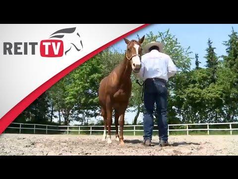 Horsemanship - die Bodenarbeit mit dem Pferd