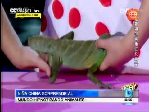 Niña china sorprende al mundo hipnotizando animales