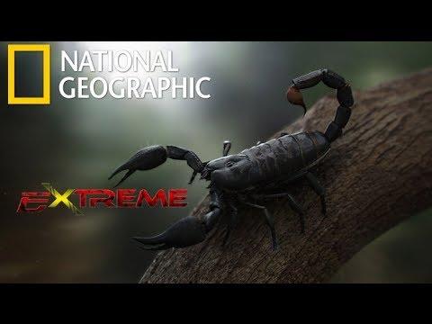Nat Geo wild | The Most Extreme Venom | National Geographic Documentary