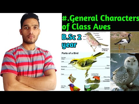General Characters of class Aves/ B.Sc 2 year