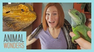 All Of Our Reptiles! by Animal Wonders