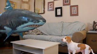 Hilarious Dog vs. Shark Balloon