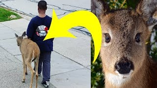 Video Neighbors Noticed That This Boy Walked A Deer Every Day. Then They Looked At The Animal's Eyes MP3, 3GP, MP4, WEBM, AVI, FLV April 2018