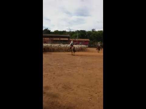 Cortando o estradão do Estado Do Pará   Novo Repartimento - PA   Vídeo enviado via whatsApp pelo nos