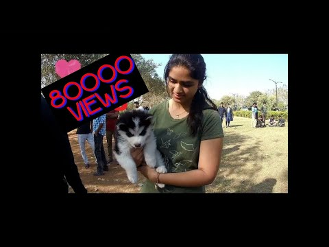 Dogs Park At Necklace Road Hyderabad
